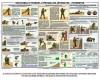 Плакат уч. «Изготовка и правила стрельбы из автом., пулеметов»